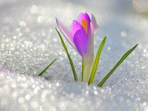 Весны прелестницы уж видно очертанье